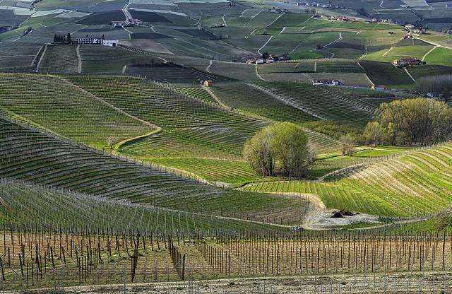 SPRING LANDS for WINE