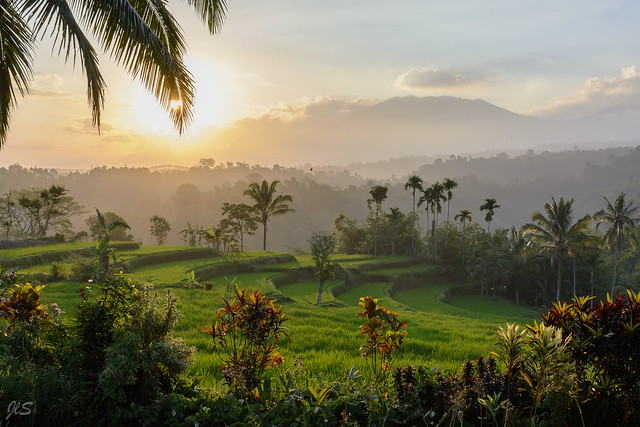 Sunset over rice fields (Raung volcano in the background)