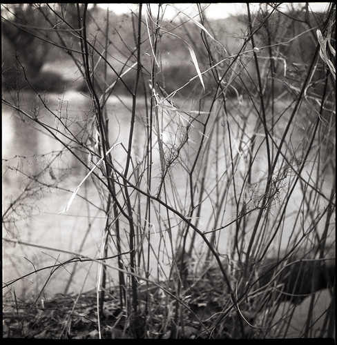 driedgrasses saplings dormancy riverside frenchbroadriver hominycreekriverpark asheville northcarolina yashicad fomapan200 ilfordilfosol3developer tlr twinlensreflex 6x6 mediumformat monochrome monochromatic blackandwhite landscape urbanpark 120 120film film analog