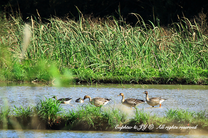 IMG_0092a