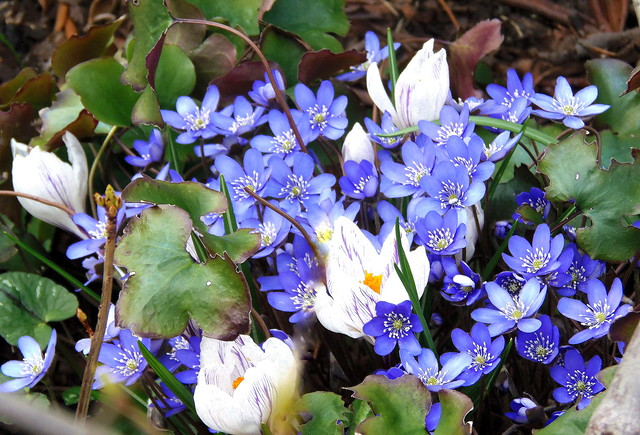 Blühender März / Blooming March
