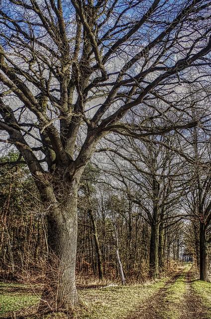The avenue of the talking trees / Die Allee der sprechenden Bäume