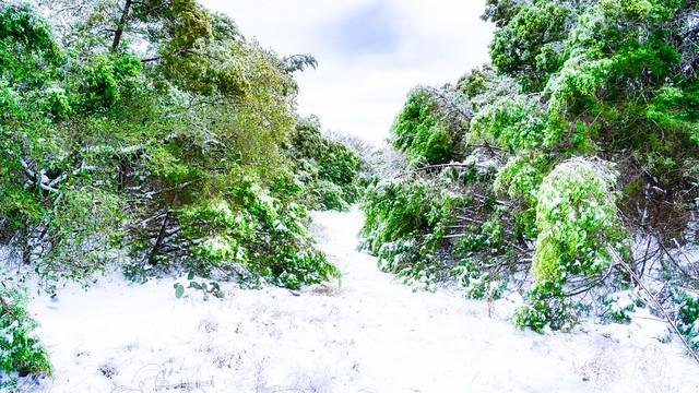SnowStorm_009-Edit