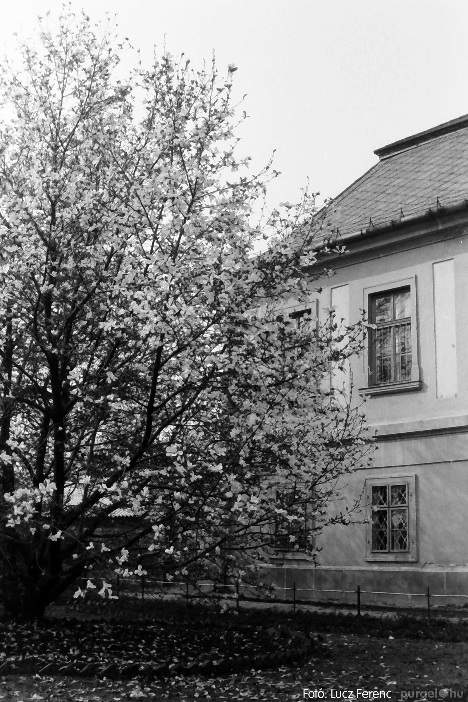 077. 1977. Virágba borult a liliomfa 002. - Fotó: Lucz Ferenc.jpg