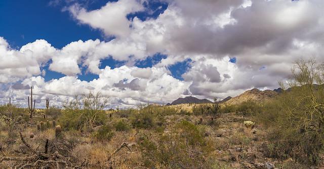 Sonoran Desert Pano