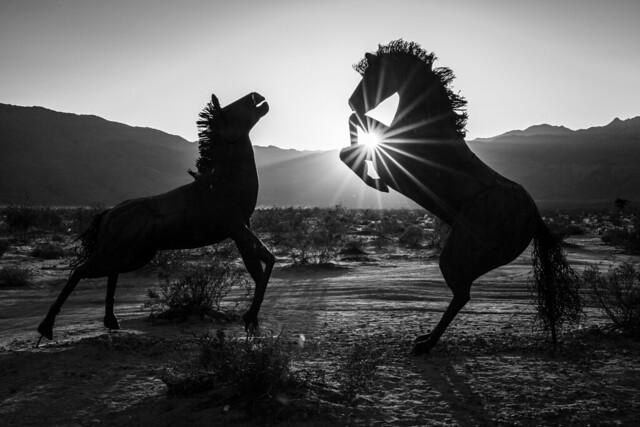 Trick Ponies at Sunset