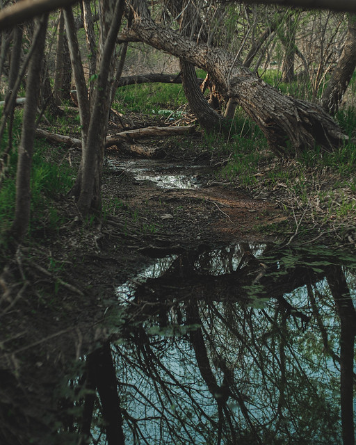 creek and trees