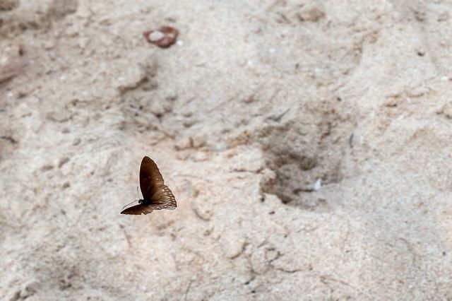 Flutter - _TNY_2788