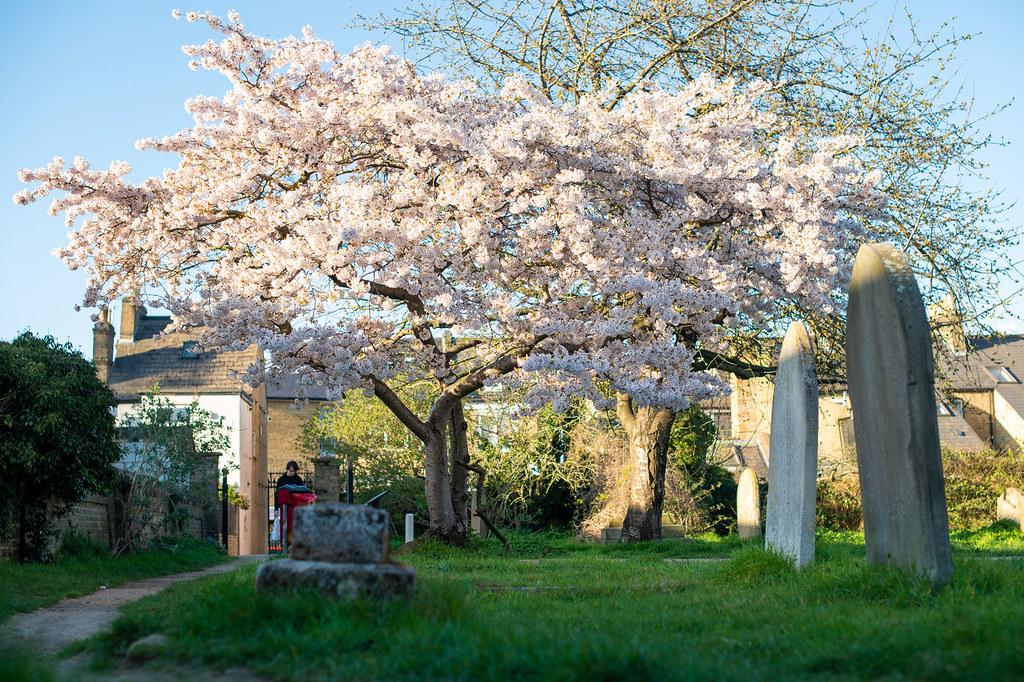 Cambridge old cementery