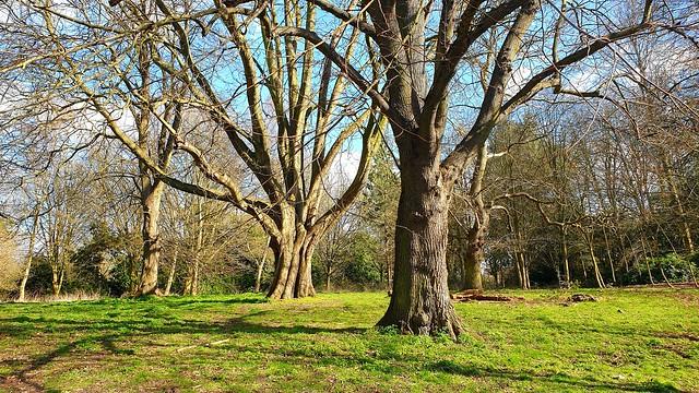 Tree-mendous Tuesday