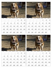 April 2021 Dog Park Calendar: Oz (4)
