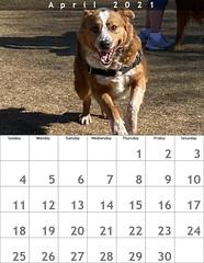 April 2021 Dog Park Calendar: Oz
