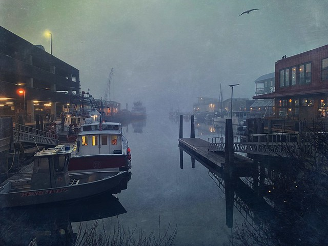 Morning fog, Portland, Maine