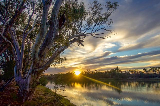 Murray River  - Merbein