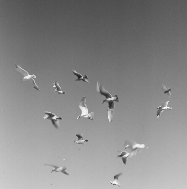 wind in wings