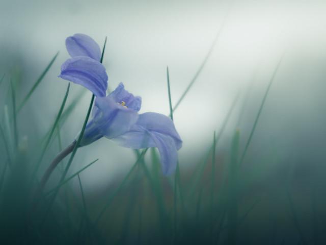 A Spring Flower