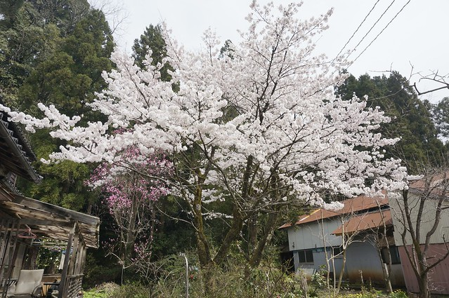 Spring Time 9
