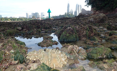 Living shores of Sentosa, Apr 2021
