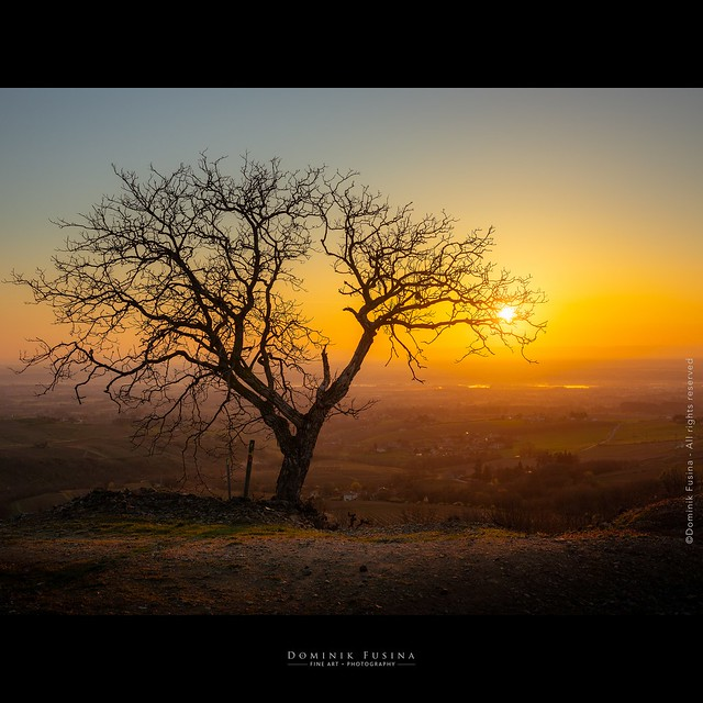 Sunny Fruit | Beaujolais