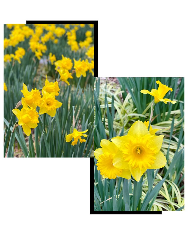 Spring Updates, Flowers, Tanvii.com