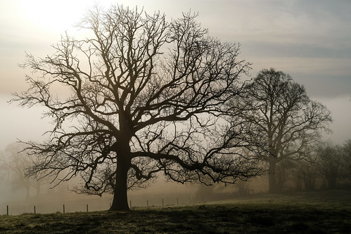 Fog trees | by Phil Gyford