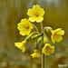 Macro Flower_00229