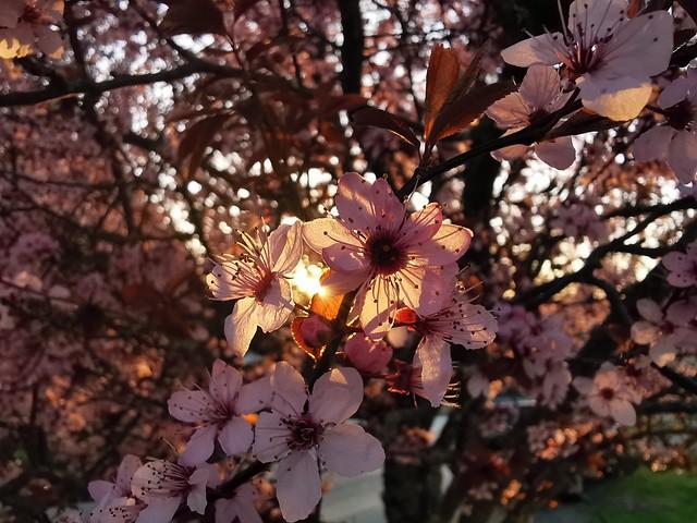Light, filtered through beauty