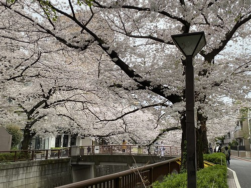 目黒川沿いの桜 中目黒 2021/3/28