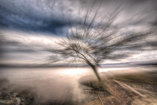 Tree Wondrous