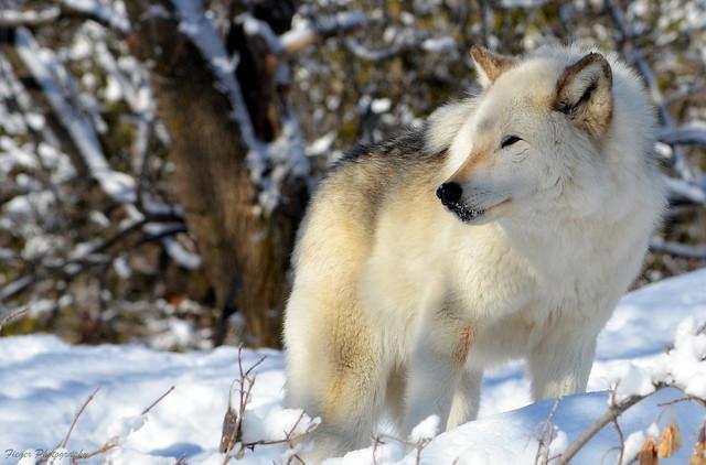 RIP sweet Gargamel... the Wolf