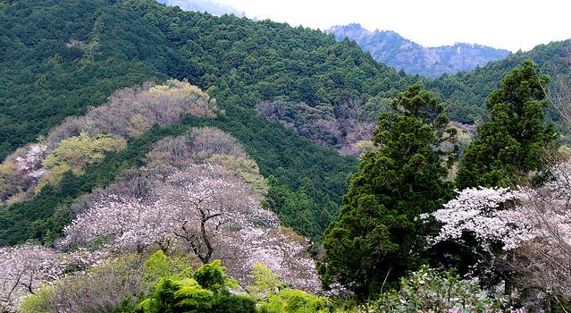 blooming spring countryside !! , Isehara, Kanagawa, Japan