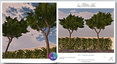 La Petite Vie - Pin - Mediterraneen