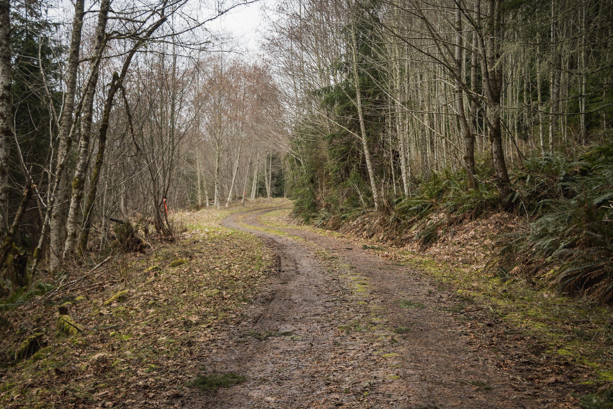This way to Stumptop