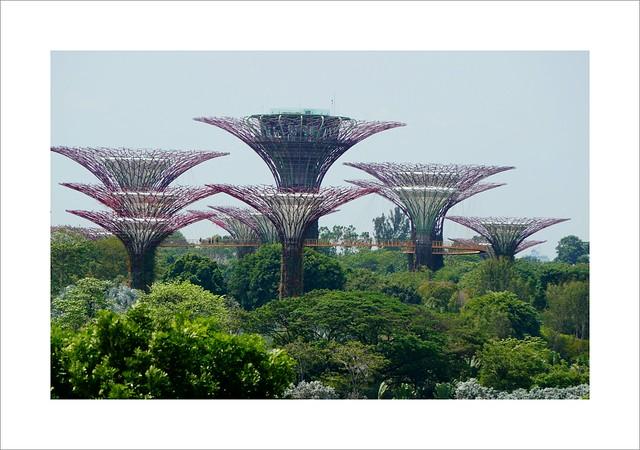 Supertree Observatory & OCBC Skyway
