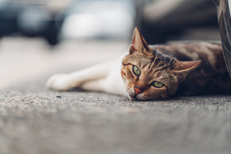 阿喵喵|Cat