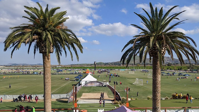 Football fields on a sunny day with two palm trees framing the pitches in the background