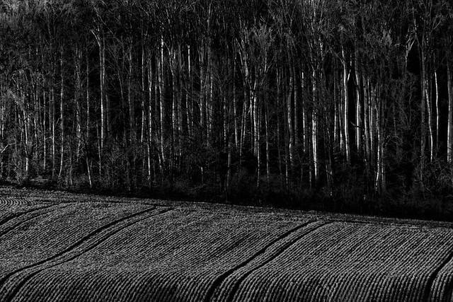 A l'orée du bois (2)