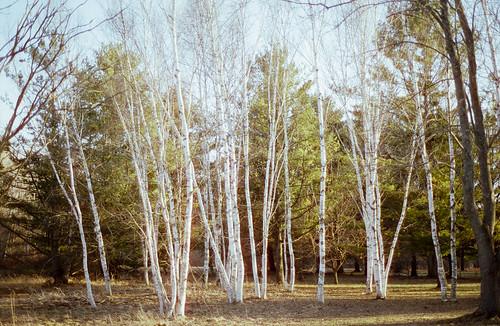 some more cinestill 50d | www.ellsworthbell.com