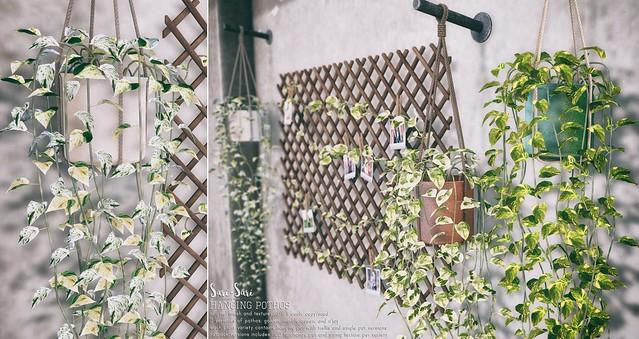 Sari-Sari - Hanging Pothos