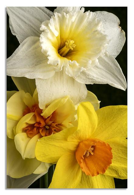 Spring time colour