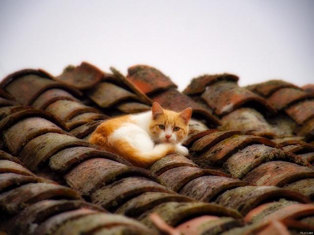 La gata en el tejado no de zinc