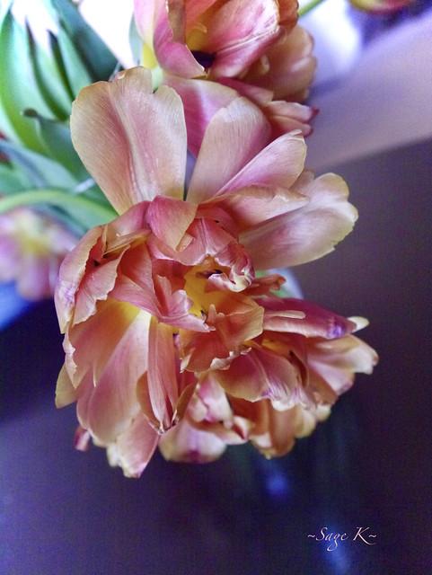 ~Double Tulips~