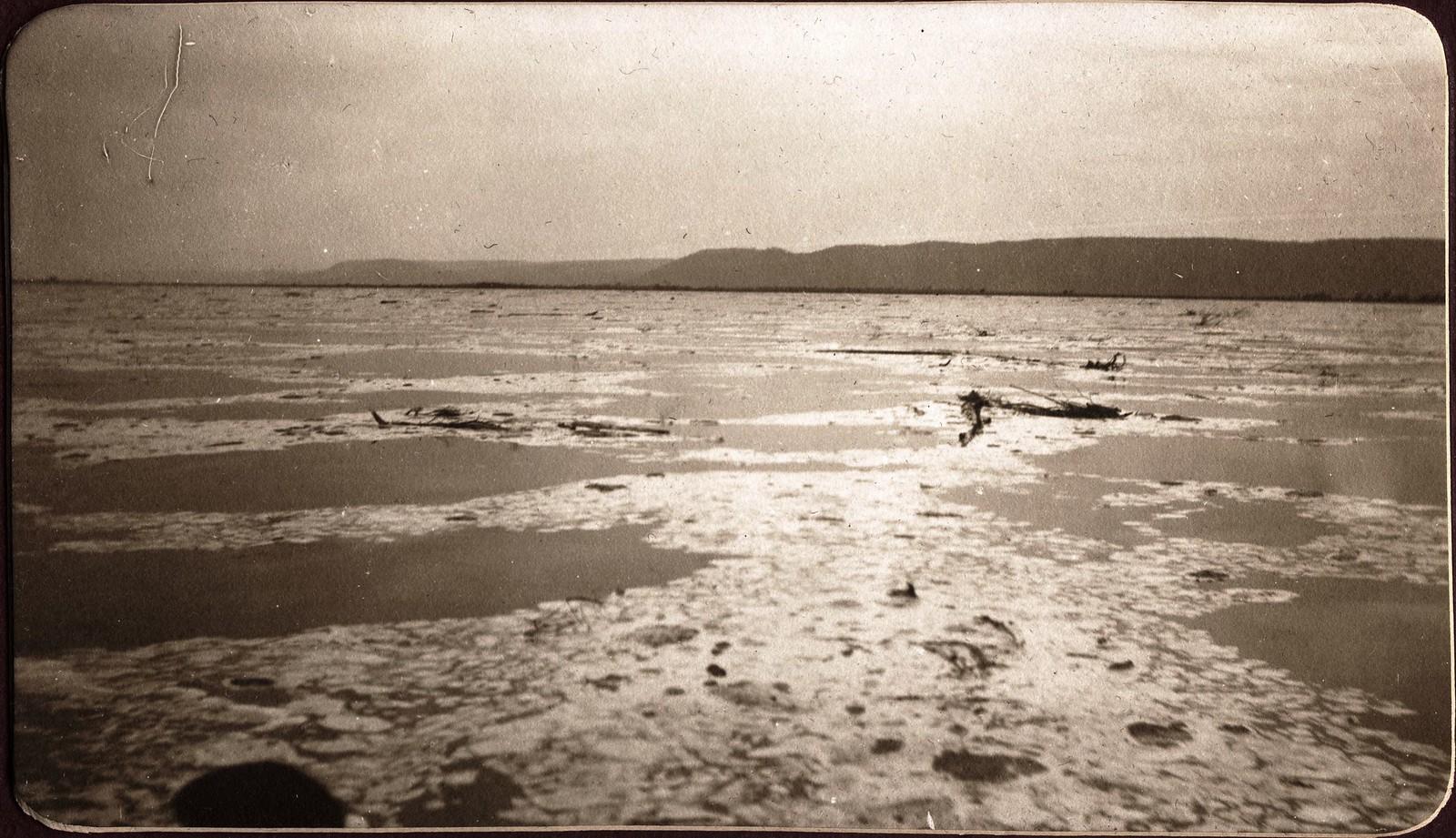 Пена и наносник во время большого паводка на реке Зее.