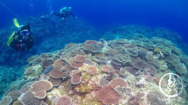 美しい珊瑚にうっとりしてました。