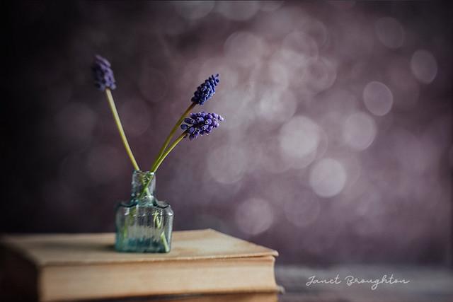 Grape Hyacinths & Bokeh