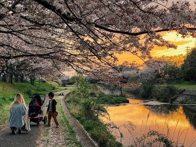 Sakura_99