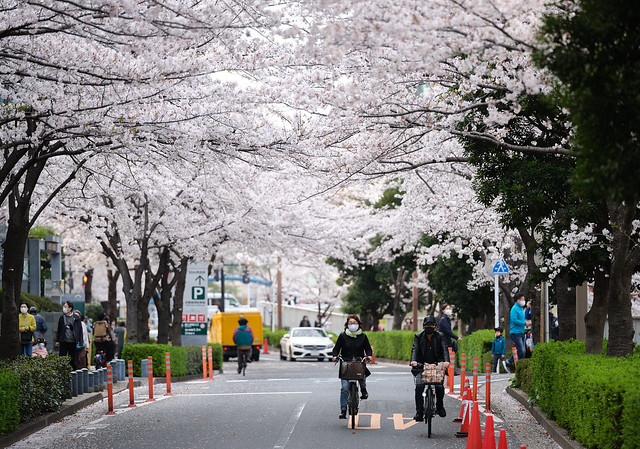Tokyo petals - 3