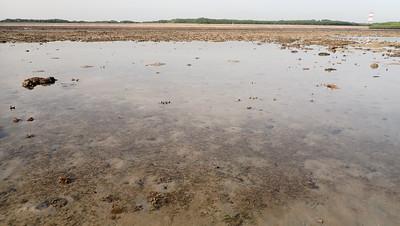 Seagrasses at Terumbu Semakau, Apr 2021
