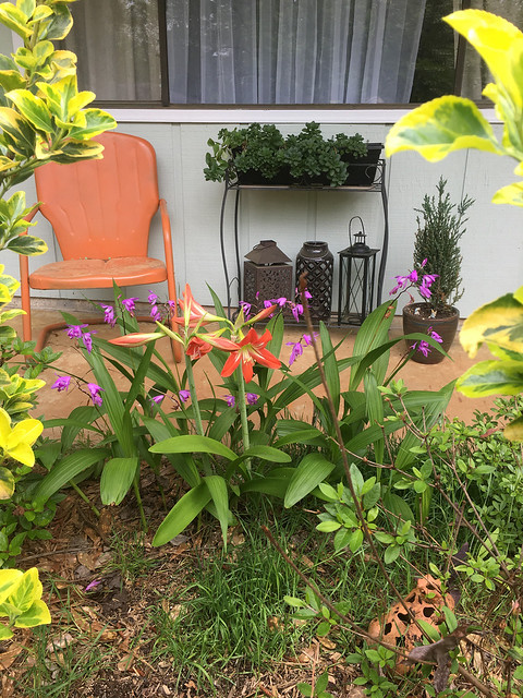 A home garden.