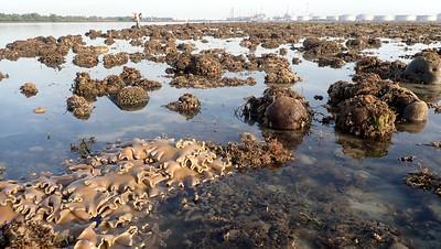 Living shores of Terumbu Semakau, Apr 2021